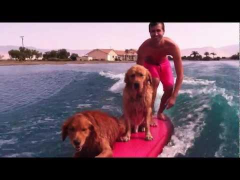 Double Dog Surfing #NanaNanaSubaru