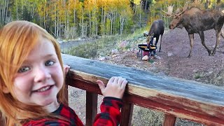 Cabin Morning Routine Feeding Moose And Animals Then Riding In The Mountains With Family 🦌
