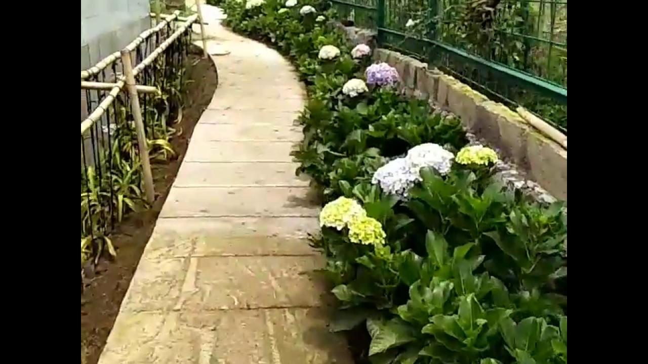 17 Jenis Tanaman Minimalis Rekomendasi Arsitek Ibad Garden