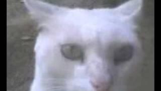 Gato poseido