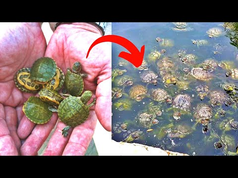 What Actually Happens When You Buy A Turtle?