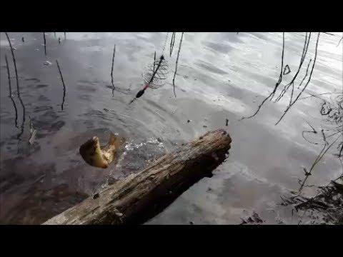 рыбалка на рощинском озере