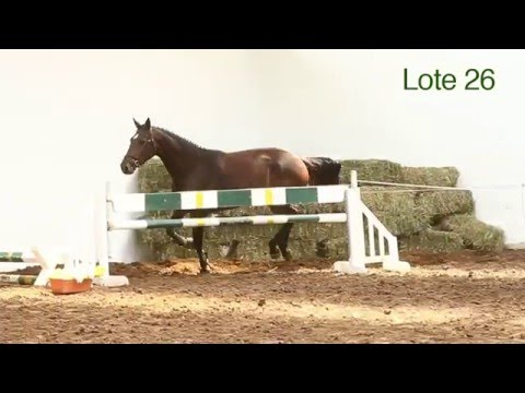 Tatabra Dublin Lote 26 - Remate 2016 // Auction 2016