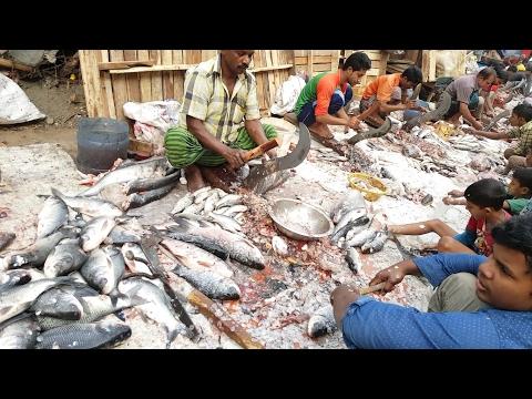 Fabulous Biggest Fish Cutting Section in Side of Road Karwan Bazar Dhaka Bangladesh