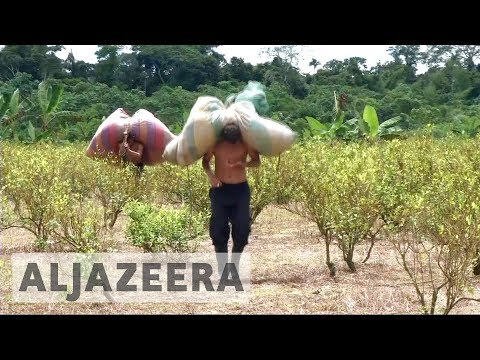 Colombia: Surge in cocaine production despite government eff