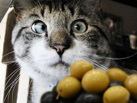 Кот и маслины