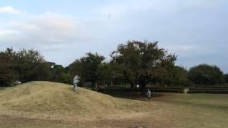 よく飛ぶ紙飛行機。飛び過ぎて、この後高い木にひっかかってしまいました。