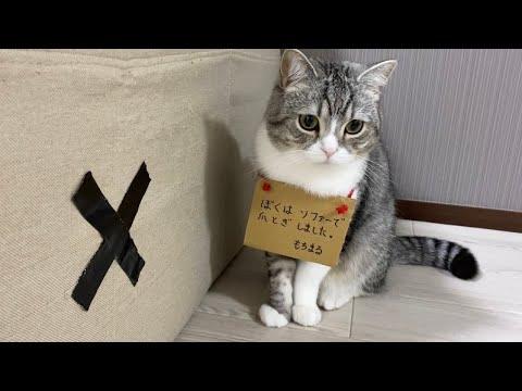 まる もち 90万人の下僕に愛される猫『もち様(もちまる)』