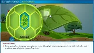 SSC Class10 Biology | Nutrition - CCE Pattern | Digital Teacher