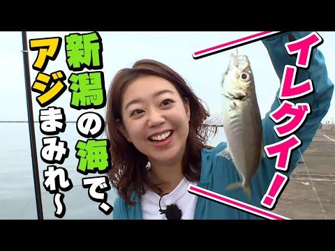GO!GO!九ちゃんフィッシング #329 「新潟!アジ!泳がせ!クロダイ!?  前篇」