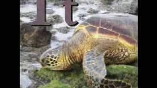 Wikipedia Animal Alphabet!!