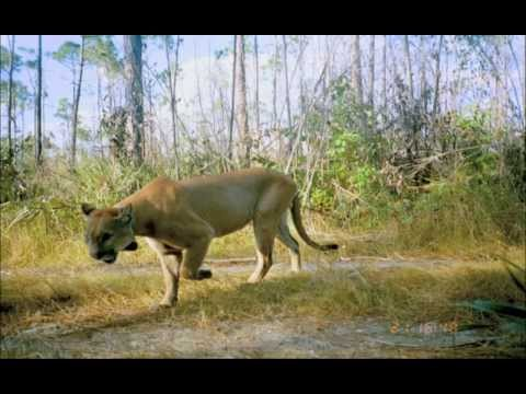 Waterways Episode 267 - Florida Panthers 2013 AND Pharmaceuticals in our Waters