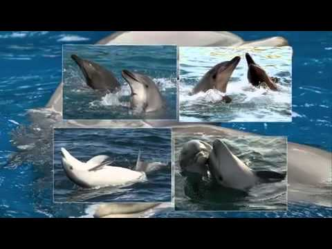 звук дельфина для цензуры