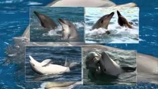 Исцеляющие звуки дельфинов - релакс