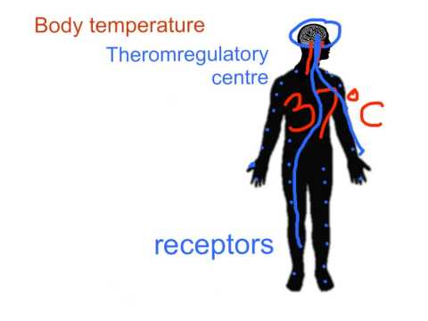 GCSE - glucose levels and temperature
