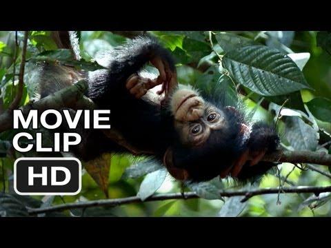 Chimpanzee Movie CLIP - Swingin' (2012) Disney Nature Movie HD