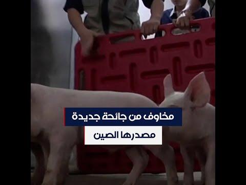 في الصين.. فيروس قد يتسبب بتفشي نوع جديد من إنفلونزا الخنازير  - 20:59-2020 / 6 / 30