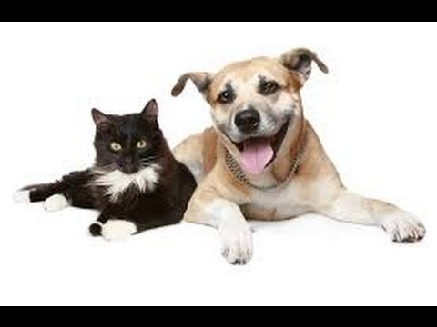 Healthy Pets Review Coupon Code 2014