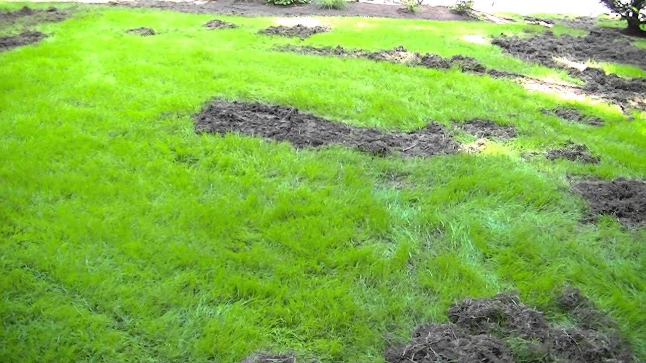 picture The Easiest Way to Repair Grass Damaged by Dogs