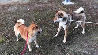 3月21日春分の日、日本犬保存会展覧会・三多摩展に参加してきました。 ...
