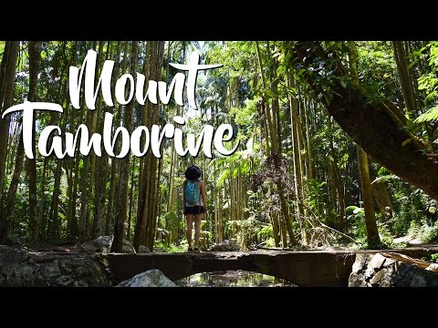 CJ Explores... Mount Tamborine (waterfalls, balance trees, sunset)