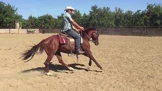 Willy aka Wright Jazzy 2010 Gelding FOR SALE