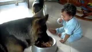 Perro y bebé