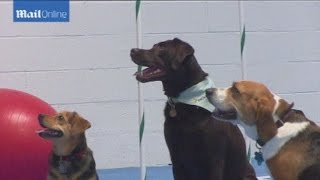 Dog Gym Helps Portly Pooches Shed Pounds