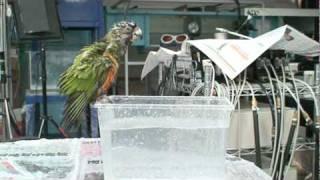 實驗室同學的賽內和澳彩一起洗澡