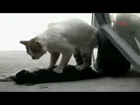 Youtube - Con mèo thương tiếc bạn chết - Diễn Đàn Tin Học.flv