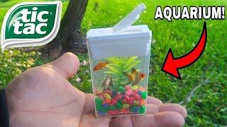 TIC TAC BOX FISH AQUARIUM! DIY