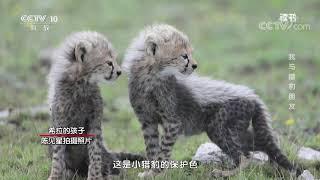 《读书》 20191226 非洲的青山 《狮野寻踪》 我与猎豹朋友  CCTV科教