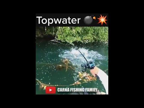 Topwater Catfish Fishing 💣💥 #fishing #catfish #topwater #shorts