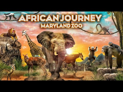 Zoo Tours Ep 94: The African Journey   Maryland Zoo
