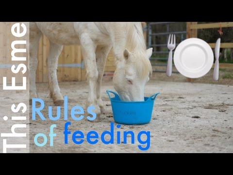 food horse