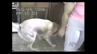 Tuyển tập những clip hài hước về động vật phần 1