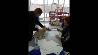 Британский котенок на выставке в Минске