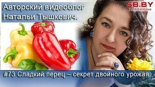 #73 Сладкий перец – секрет двойного урожая