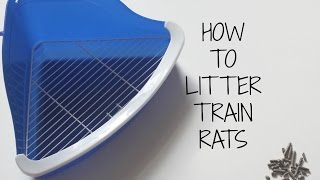 How To Litter Train Rats