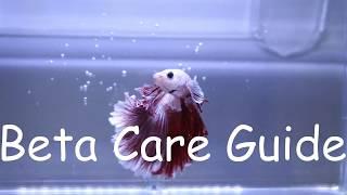 Betta Care Guide