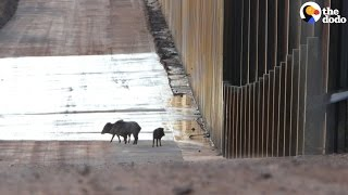 Trump's Wall Would Be Awful For Animals