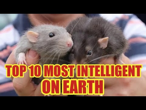 top-10-most-intelligent-animals-on-earth