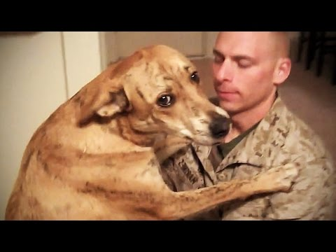 Thumbnail: TRY NOT TO CRY: Dogs Meet Their Owner After Long Time II [NEW] (HD) [Funny Pets]