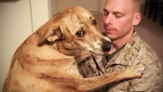 TRY NOT TO CRY: Dogs Meet Their Owner After Long Time II [NEW] (HD) [Funny Pets] thumbnail