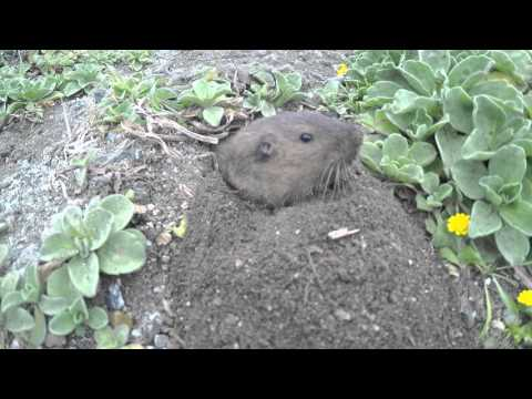 Cute Gopher Taking Plants!
