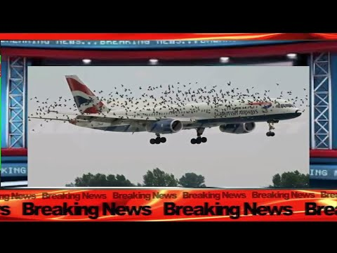 Strange Birds Attacks British Airways Grounding The Flight For Hours In China