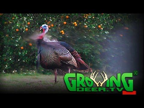 Earliest Turkey Hunt | Tagging A Tom In South Florida (#381) @GrowingDeer.tv