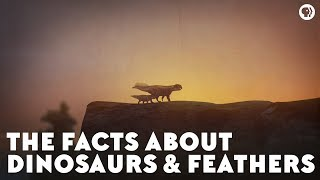 The Facts About Dinosaurs & Feathers