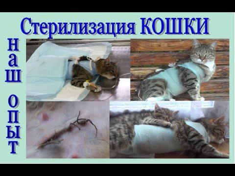 Как отходят кошки от наркоза после стерилизации