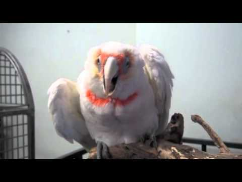 Baby Parrot Wants a Hug - YouTube